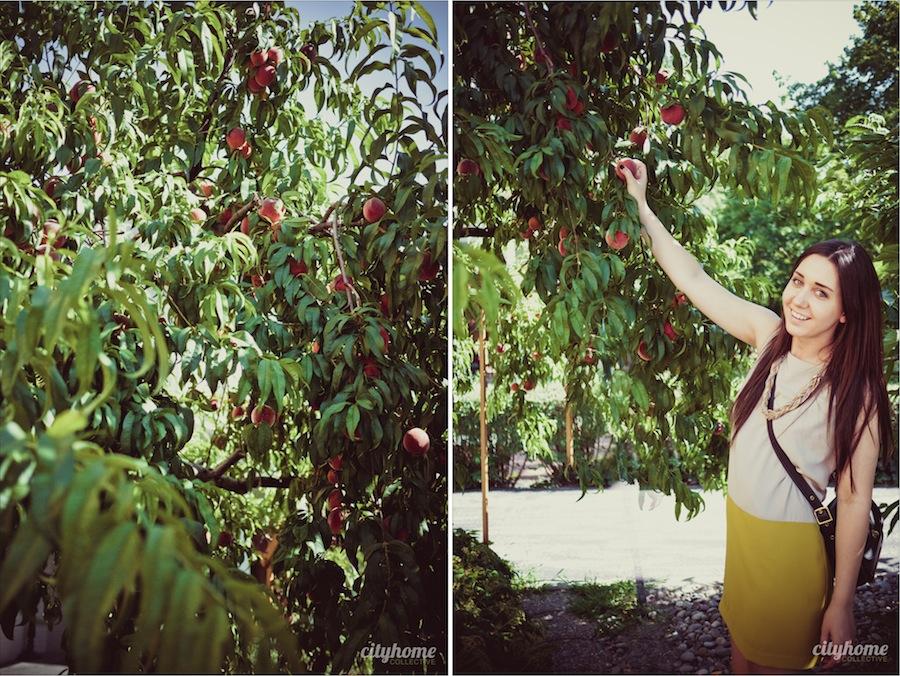 Salt-Lake-Fruit-Share-Program-1