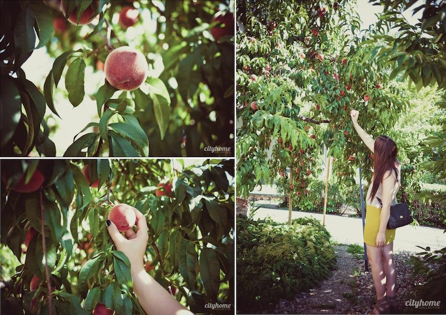 Salt-Lake-Fruit-Share-Program