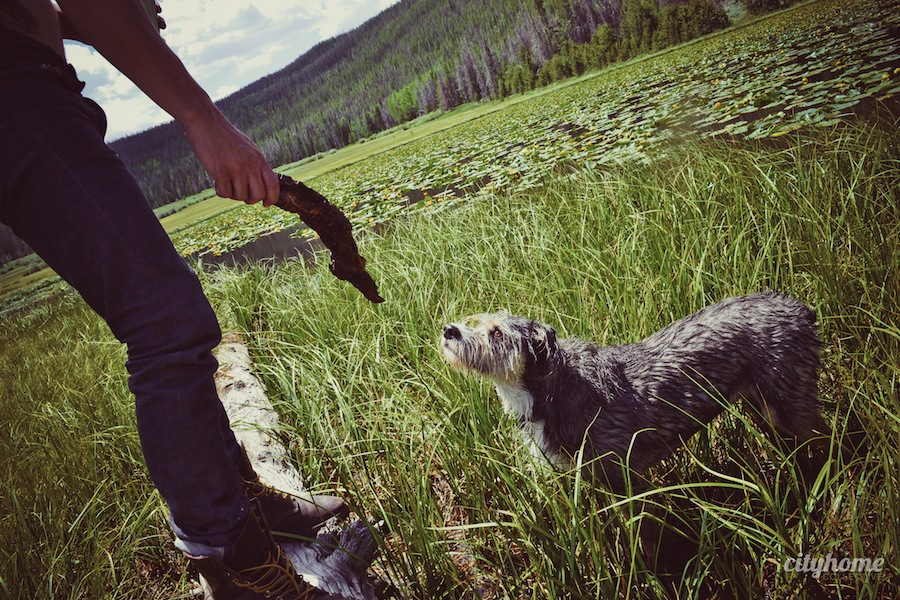 Salt-Lake-Area-Uintas-Wilderness-Camping-13