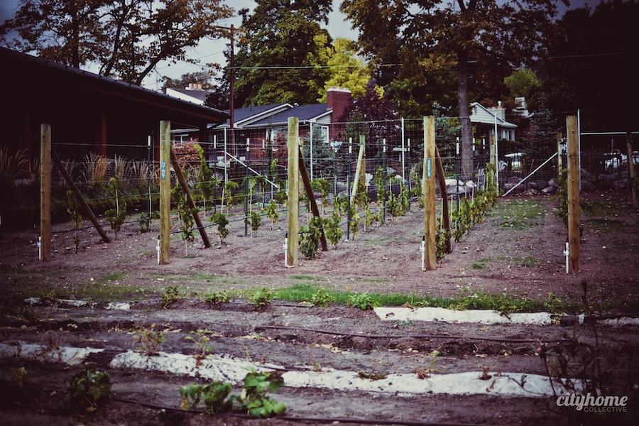 Frog-Bench-Farms-Pago-Lewandowski-Wines-Salt-lake-Local-Dining-13