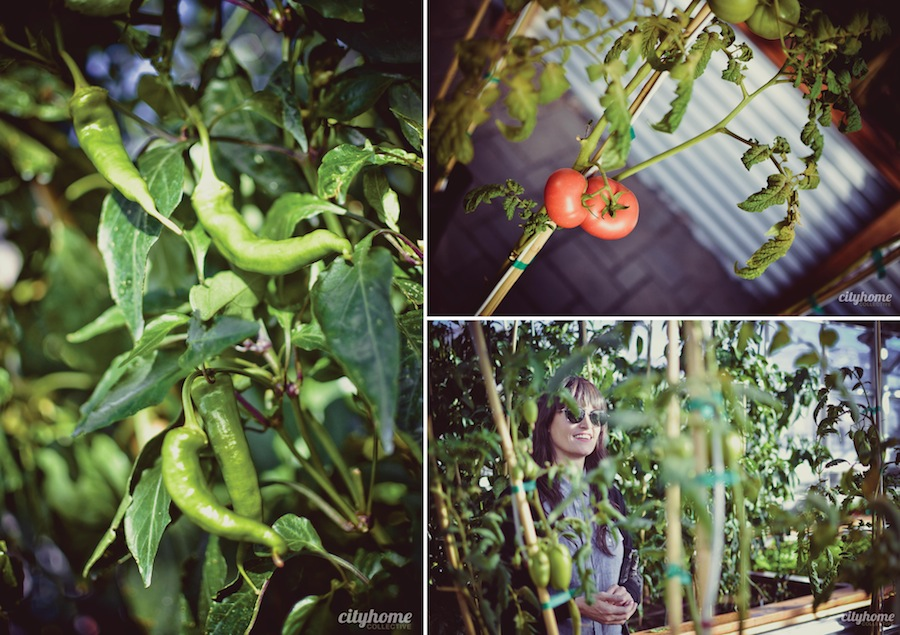 Frog-Bench-Farms-Salt-Lake-Local-Produce