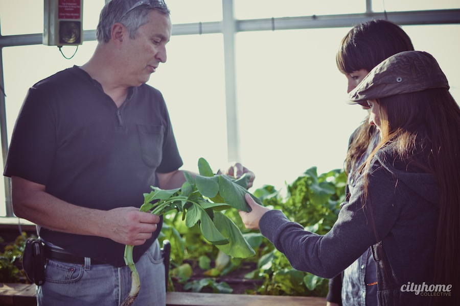 Frog-Bench-Farms-Salt-Lake-Local-Sustainable-Produce-Business-15