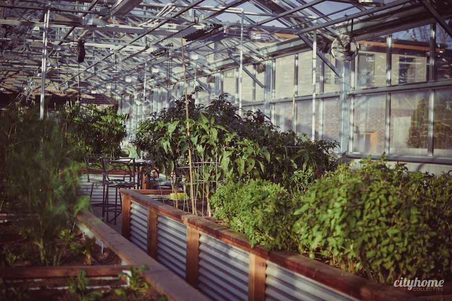 Frog-Bench-Farms-Salt-Lake-Local-Sustainable-Produce-Business-16